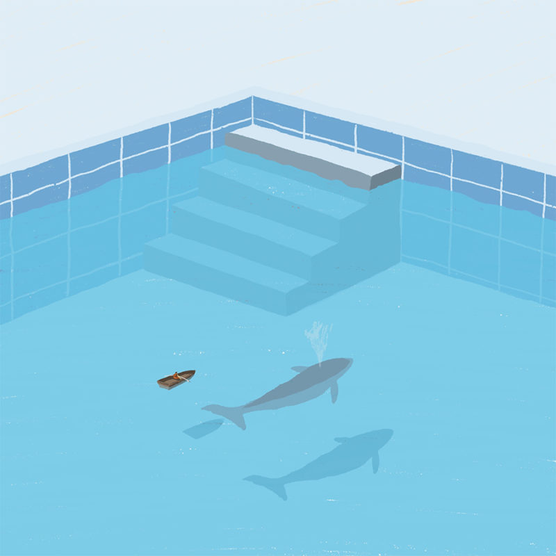 leeds illustration illustrator andy carter sailing in a pool next to whale